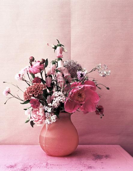 bloom_pink